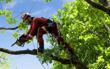 find trusted rated Riverside tree surgeons