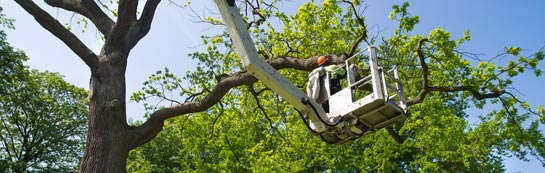 Riverside tree surgery services