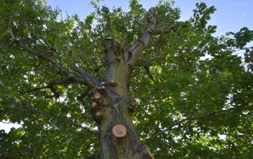 what is Riverside tree surgery?